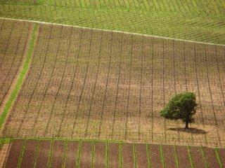 Oak-and-Vine.jpg
