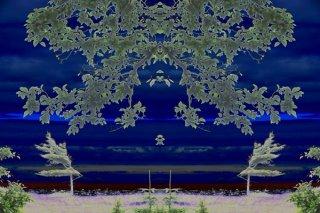 beach_tree.jpg