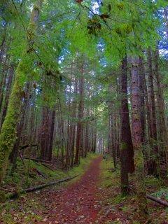 Through_the_Trees.jpg