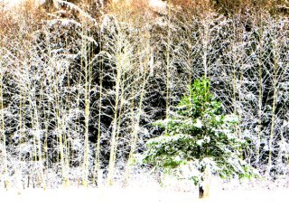 Winter-Forest_Hilliers.jpg